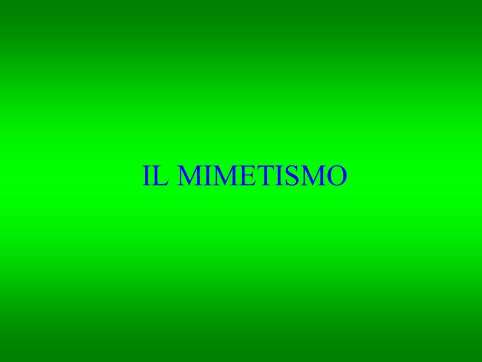 IL MIMETISMO