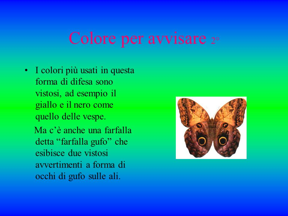 Colore per avvisare 2° I colori più usati in questa forma di difesa sono vistosi, ad esempio il giallo e il nero come quello delle vespe.