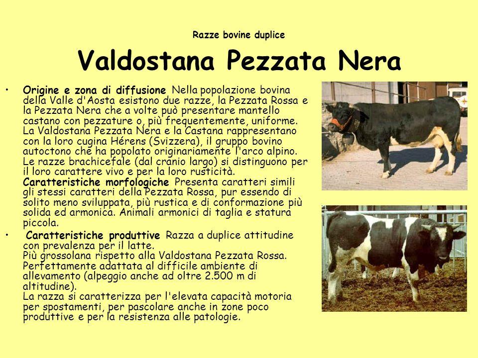 Razze bovine duplice Valdostana Pezzata Nera Origine e zona di diffusione Nella popolazione bovina della Valle d'Aosta esistono due razze, la Pezzata