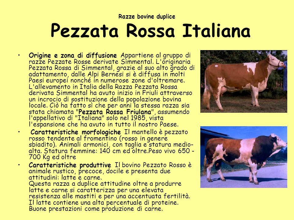 Razze bovine duplice Pezzata Rossa Italiana Origine e zona di diffusione Appartiene al gruppo di razze Pezzate Rosse derivate Simmental. L'originaria