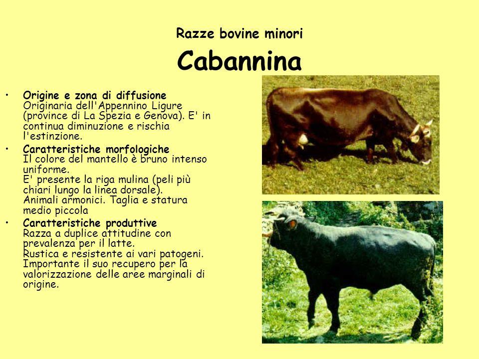 Razze bovine minori Cabannina Origine e zona di diffusione Originaria dell'Appennino Ligure (province di La Spezia e Genova). E' in continua diminuzio
