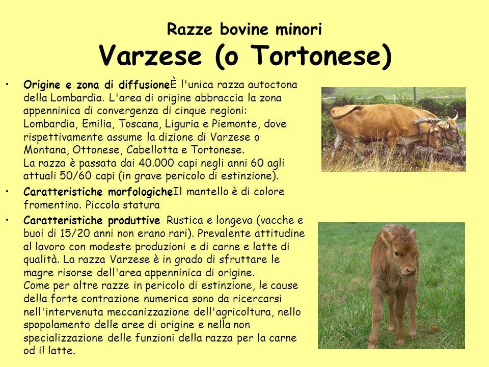 Razze bovine minori Varzese (o Tortonese) Origine e zona di diffusioneÈ l'unica razza autoctona della Lombardia. L'area di origine abbraccia la zona a