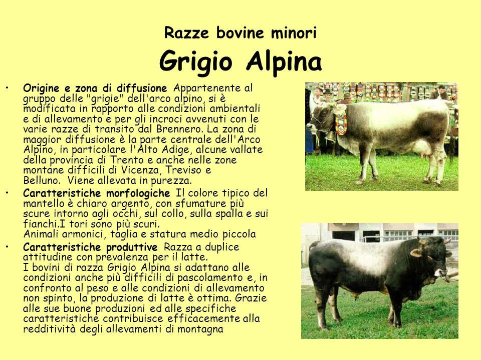Razze bovine minori Grigio Alpina Origine e zona di diffusione Appartenente al gruppo delle