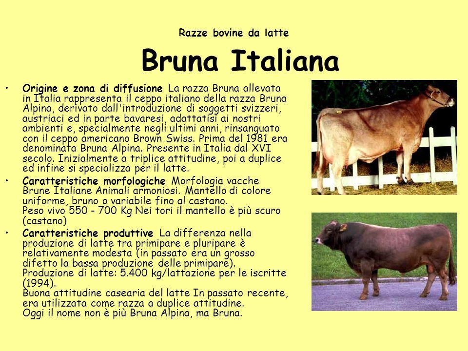 Razze bovine da latte Bruna Italiana Origine e zona di diffusione La razza Bruna allevata in Italia rappresenta il ceppo italiano della razza Bruna Al