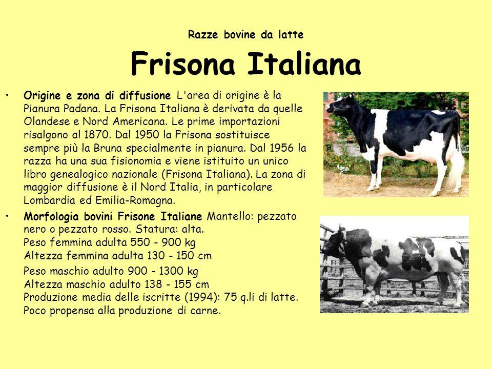 Razze bovine da latte Frisona Italiana Origine e zona di diffusione L'area di origine è la Pianura Padana. La Frisona Italiana è derivata da quelle Ol
