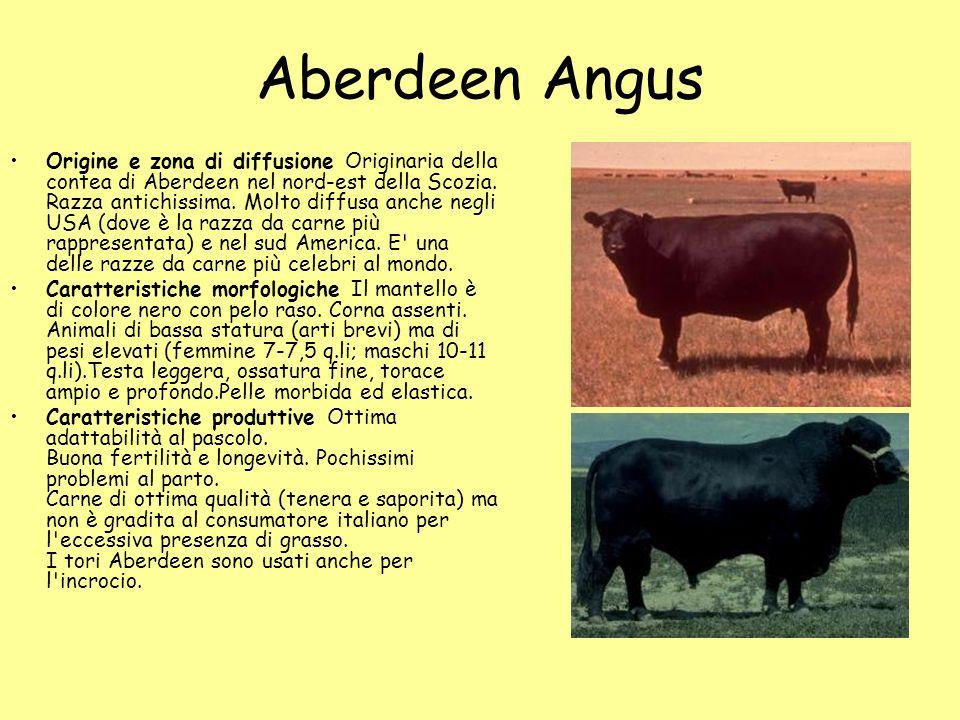 Aberdeen Angus Origine e zona di diffusione Originaria della contea di Aberdeen nel nord-est della Scozia. Razza antichissima. Molto diffusa anche neg