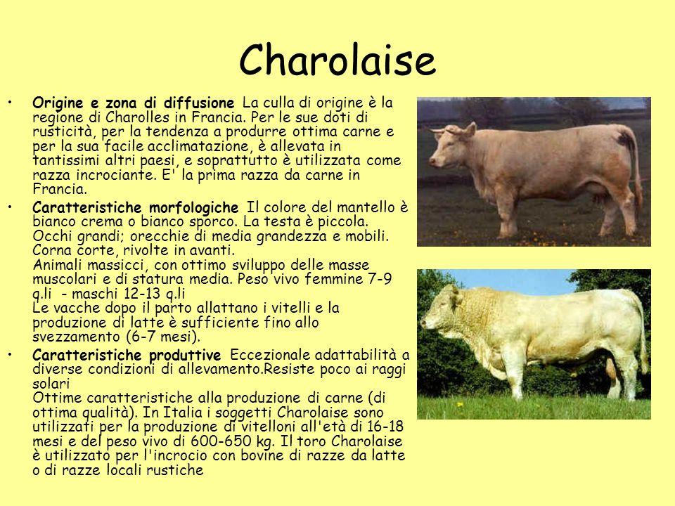 Charolaise Origine e zona di diffusione La culla di origine è la regione di Charolles in Francia. Per le sue doti di rusticità, per la tendenza a prod