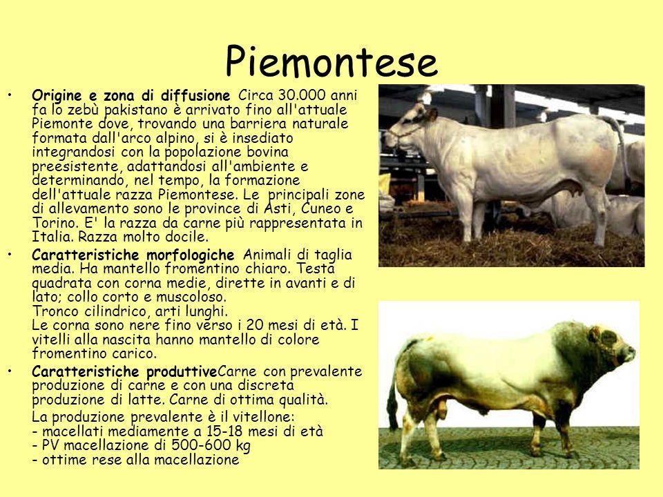 Piemontese Origine e zona di diffusione Circa 30.000 anni fa lo zebù pakistano è arrivato fino all'attuale Piemonte dove, trovando una barriera natura