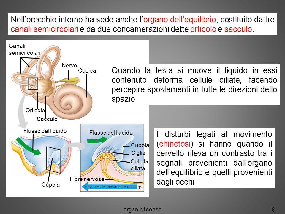 organi di senso 6 Canali semicircolari Nervo Coclea Orticolo Sacculo Flusso del liquido Cupola Flusso del liquido Cupola Ciglia Cellula ciliata Fibre
