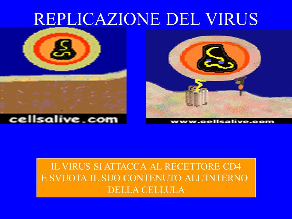 DIMINUIZIONE DEI LINFOCITI CD4 T HIV induce alterazioni alle cellule CD4 T sia quantitativamente che qualitativamente: i linfo T infettati dal virus vengono distrutti dai linfociti citotossici linfociti T non infettati vengono comunque attivati e si distruggono per apoptosi si assiste alla duplicazione di linfociti T che sono infettati da HIV, per sopperire alla diminuizione degli stessi il virus produce varianti sempre più citotossiche, per sfuggire allattacco del sistema immunitario
