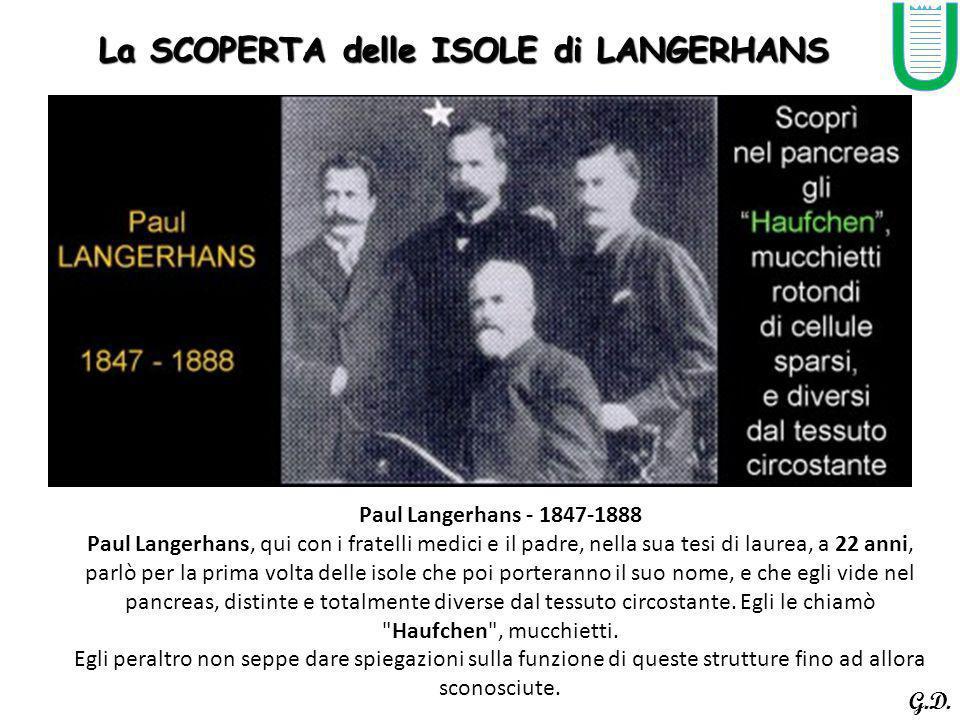 La SCOPERTA delle ISOLE di LANGERHANS Paul Langerhans - 1847-1888 Paul Langerhans, qui con i fratelli medici e il padre, nella sua tesi di laurea, a 22 anni, parlò per la prima volta delle isole che poi porteranno il suo nome, e che egli vide nel pancreas, distinte e totalmente diverse dal tessuto circostante.