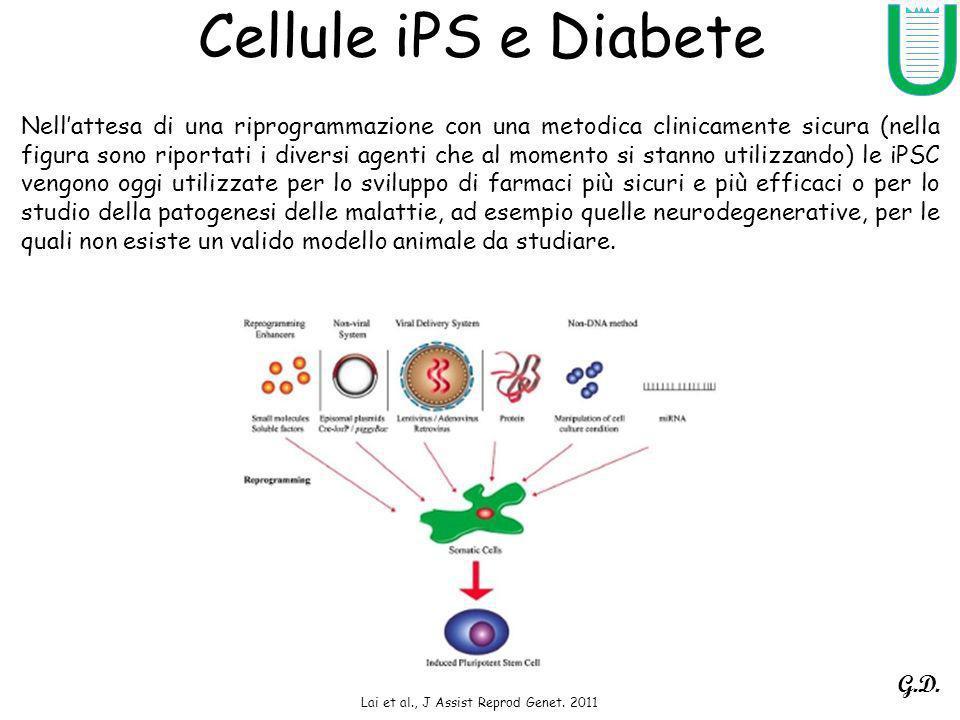 Cellule iPS e Diabete Lai et al., J Assist Reprod Genet. 2011 Nellattesa di una riprogrammazione con una metodica clinicamente sicura (nella figura so