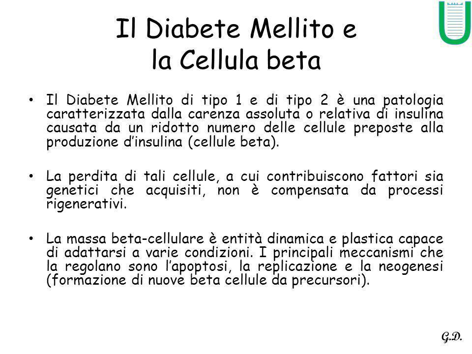 Il Diabete Mellito e la Cellula beta Il Diabete Mellito di tipo 1 e di tipo 2 è una patologia caratterizzata dalla carenza assoluta o relativa di insulina causata da un ridotto numero delle cellule preposte alla produzione dinsulina (cellule beta).