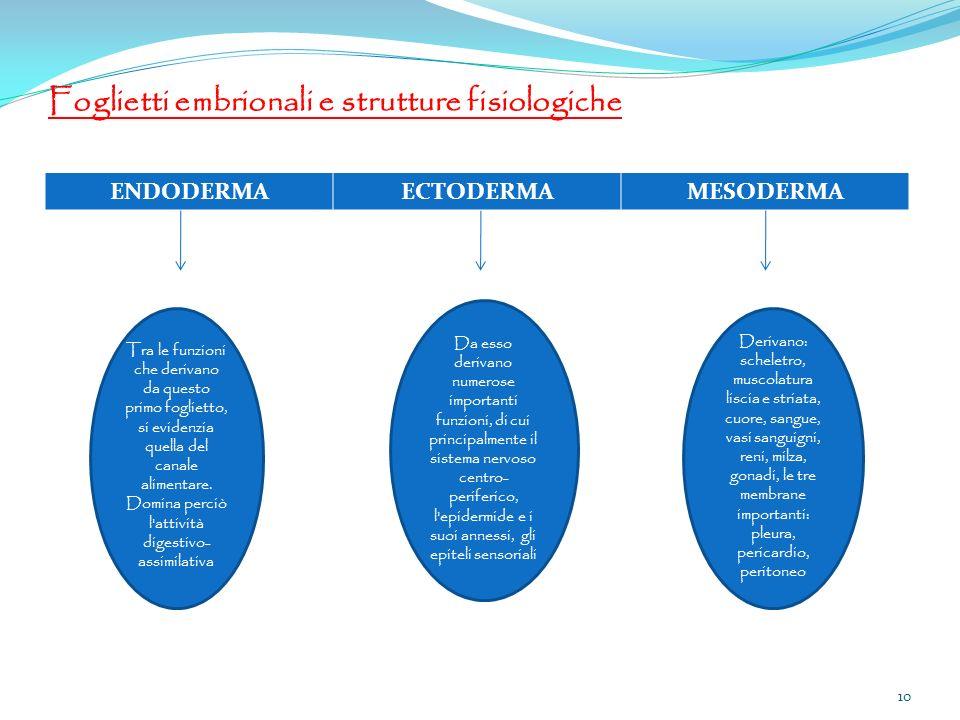 Foglietti embrionali e strutture fisiologiche ENDODERMAECTODERMAMESODERMA Tra le funzioni che derivano da questo primo foglietto, si evidenzia quella