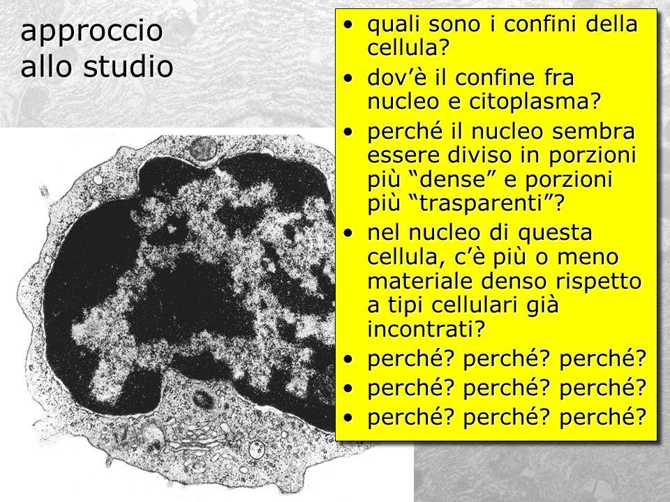 approccio allo studio quali sono i confini della cellula?quali sono i confini della cellula? dovè il confine fra nucleo e citoplasma?dovè il confine f