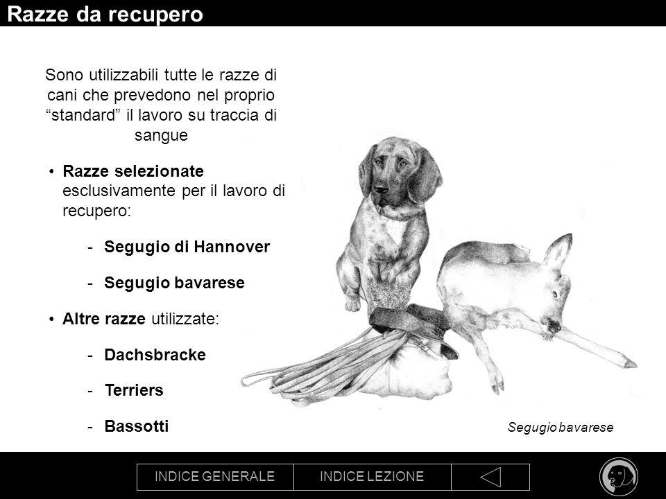 INDICE GENERALEINDICE LEZIONE Segugio bavarese Razze da recupero Sono utilizzabili tutte le razze di cani che prevedono nel proprio standard il lavoro