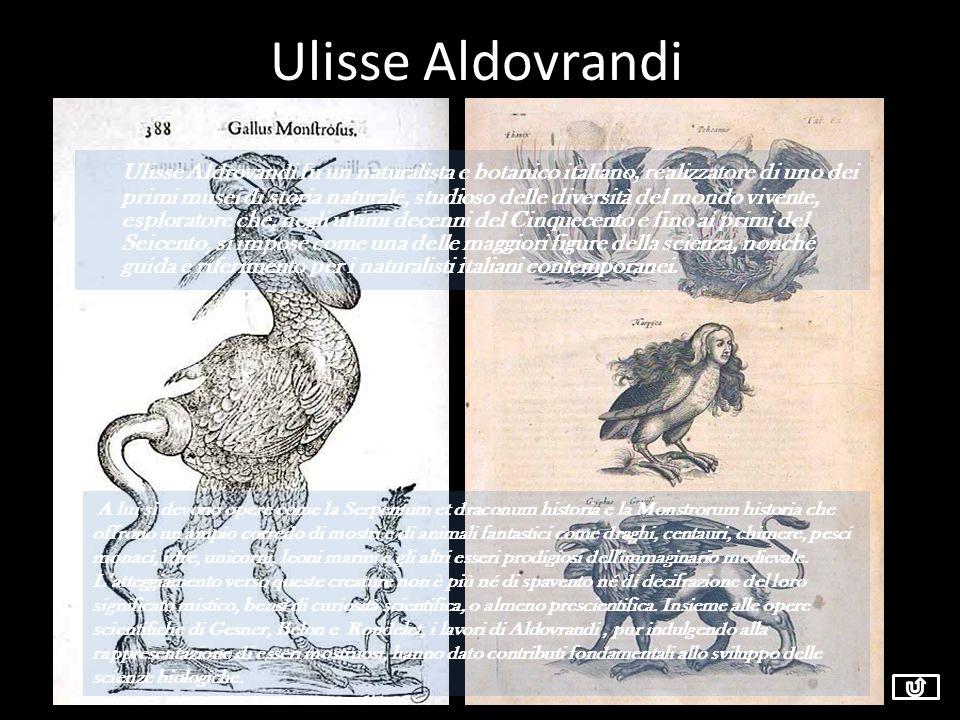 Ulisse Aldovrandi Ulisse Aldrovandi fu un naturalista e botanico italiano, realizzatore di uno dei primi musei di storia naturale, studioso delle dive