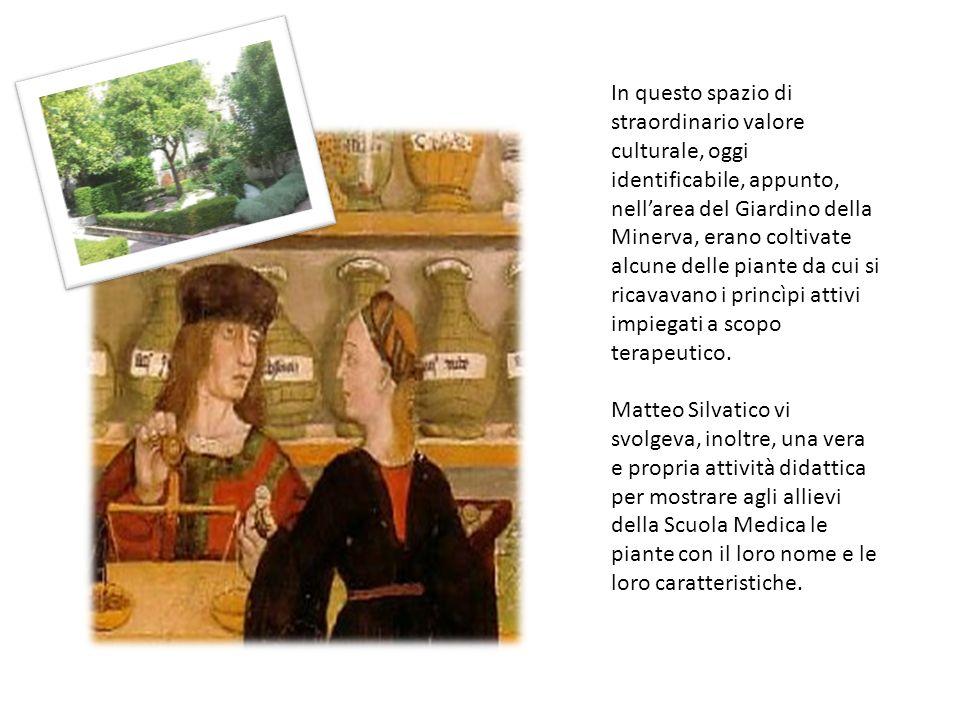 Il Giardino della Minerva si trova nel cuore del centro antico di Salerno, in una zona denominata nel Medioevo Plaium montis, a metà strada di un idea