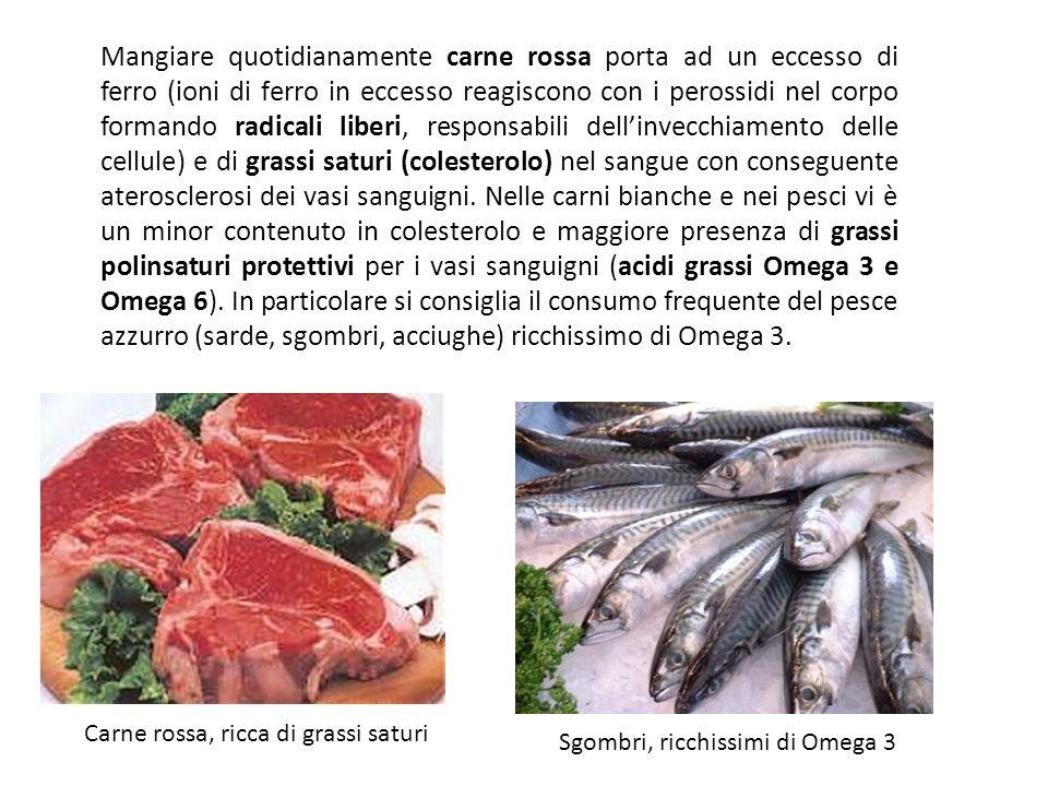 Nella nuova piramide alimentare vengono preferiti i pesci e le carni bianche (pollo, tacchino, coniglio) alle carni rosse. Recenti studi hanno stabili