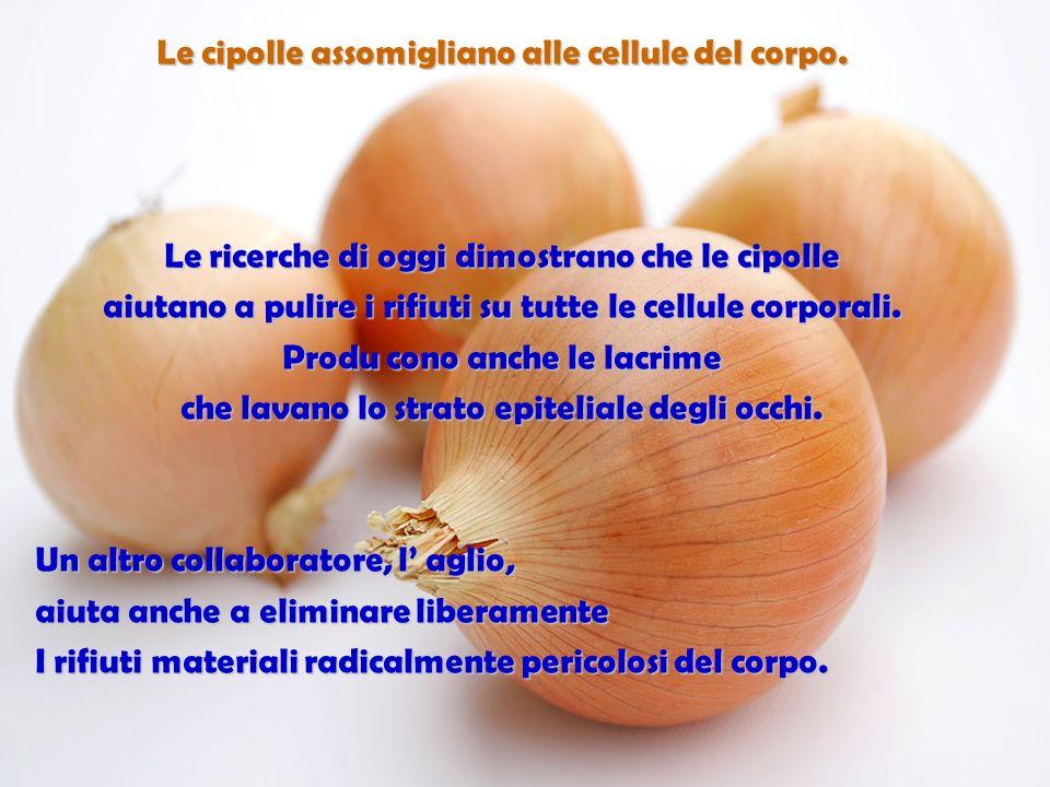 Larancia, il pompelmo e gli altri frutti citrici assomigliano alle ghiandole dei seni delle donne… Stimolano la salute dei seni e il movimento interno