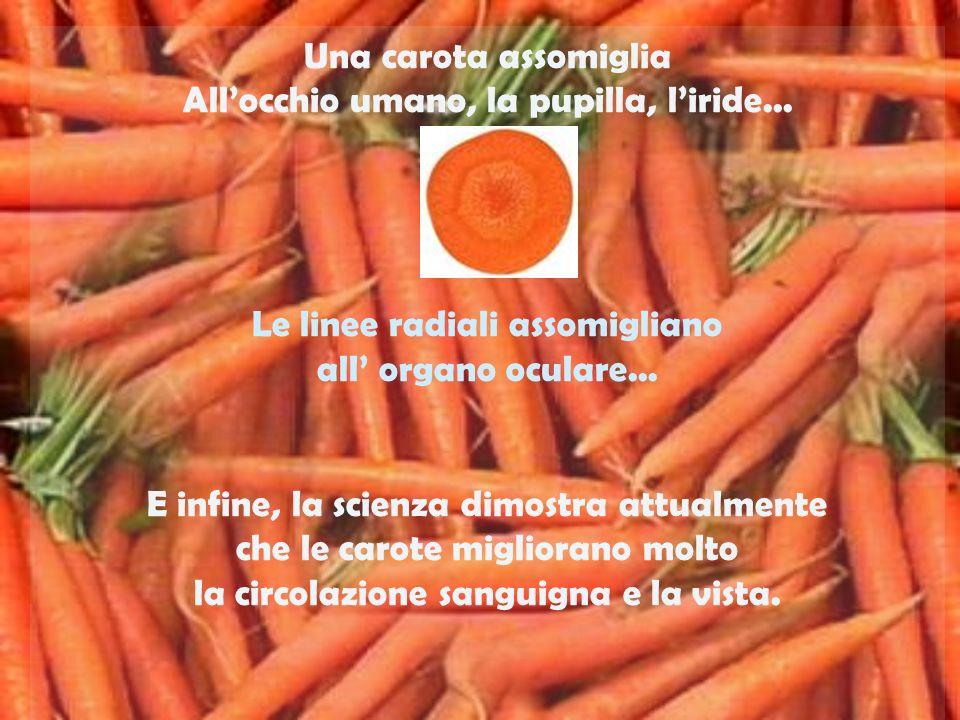 Una carota assomiglia Allocchio umano, la pupilla, liride...