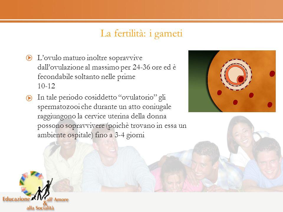 La fertilità: i gameti Lovulo maturo inoltre sopravvive dallovulazione al massimo per 24-36 ore ed è fecondabile soltanto nelle prime 10-12 In tale periodo cosiddetto ovulatorio gli spermatozooi che durante un atto coniugale raggiungono la cervice uterina della donna possono sopravvivere (poichè trovano in essa un ambiente ospitale) fino a 3-4 giorni