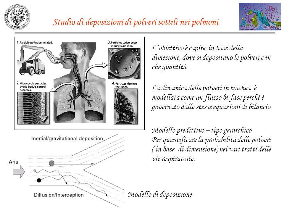 Studio di deposizioni di polveri sottili nei polmoni Modello di deposizione Lobiettivo è capire, in base della dimesione, dove si depositano le polver