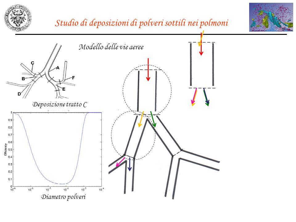 Studio di deposizioni di polveri sottili nei polmoni Modello delle vie aeree Deposizione tratto C Diametro polveri