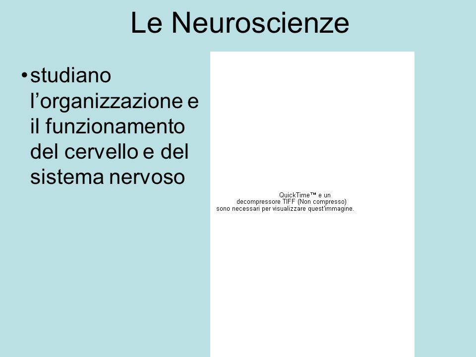 Le Neuroscienze studiano lorganizzazione e il funzionamento del cervello e del sistema nervoso