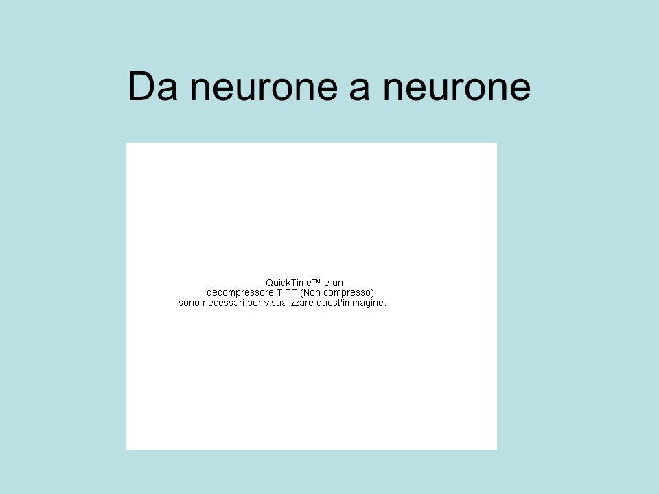Da neurone a neurone