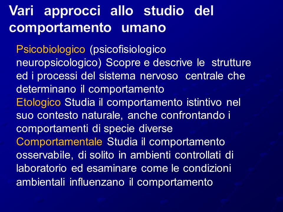 Psicobiologico (psicofisiologico neuropsicologico) Scopre e descrive le strutture ed i processi del sistema nervoso centrale che determinano il compor