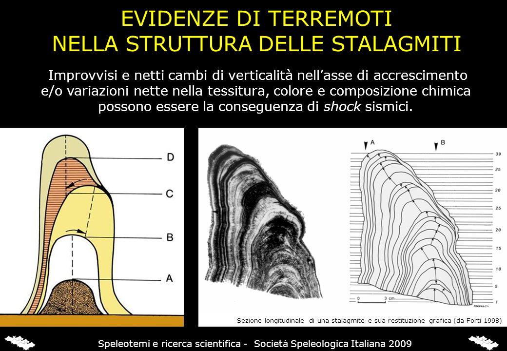 Sezione longitudinale di una stalagmite e sua restituzione grafica (da Forti 1998) Improvvisi e netti cambi di verticalità nellasse di accrescimento e