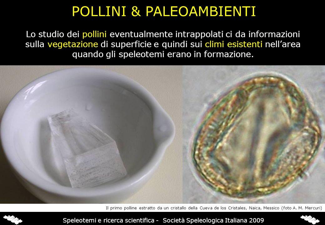 POLLINI & PALEOAMBIENTI Lo studio dei pollini eventualmente intrappolati ci da informazioni sulla vegetazione di superficie e quindi sui climi esisten