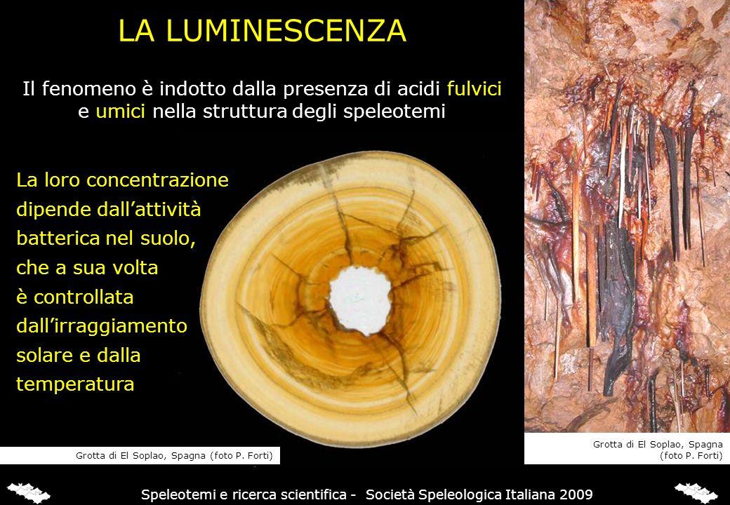 LA LUMINESCENZA Il fenomeno è indotto dalla presenza di acidi fulvici e umici nella struttura degli speleotemi La loro concentrazione dipende dallatti