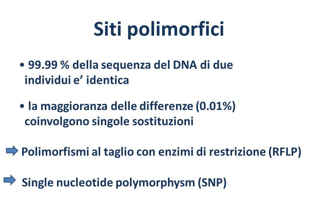 Siti polimorfici 99.99 % della sequenza del DNA di due individui e identica la maggioranza delle differenze (0.01%) coinvolgono singole sostituzioni Polimorfismi al taglio con enzimi di restrizione (RFLP) Single nucleotide polymorphysm (SNP)