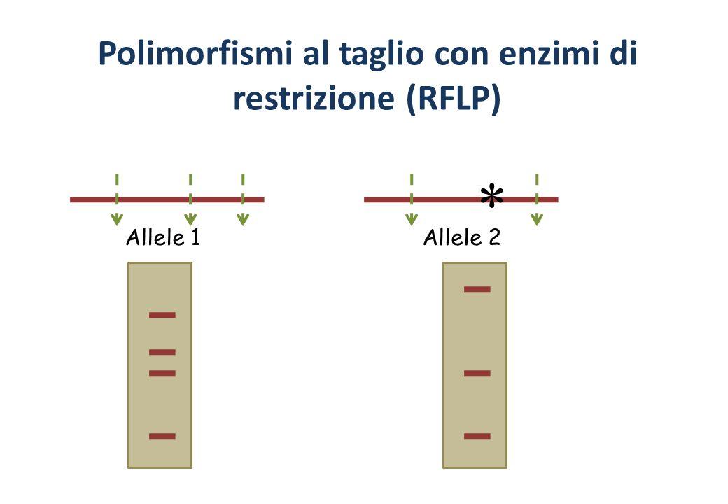 Polimorfismi al taglio con enzimi di restrizione (RFLP) Allele 1Allele 2 *