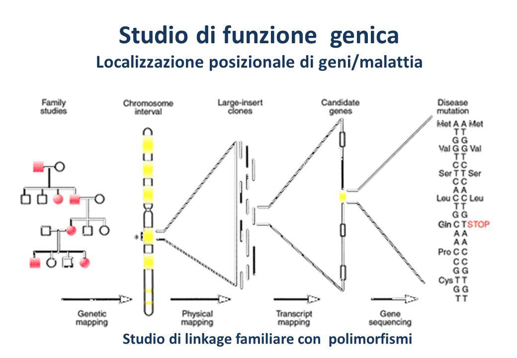 Studio di funzione genica Localizzazione posizionale di geni/malattia Studio di linkage familiare con polimorfismi