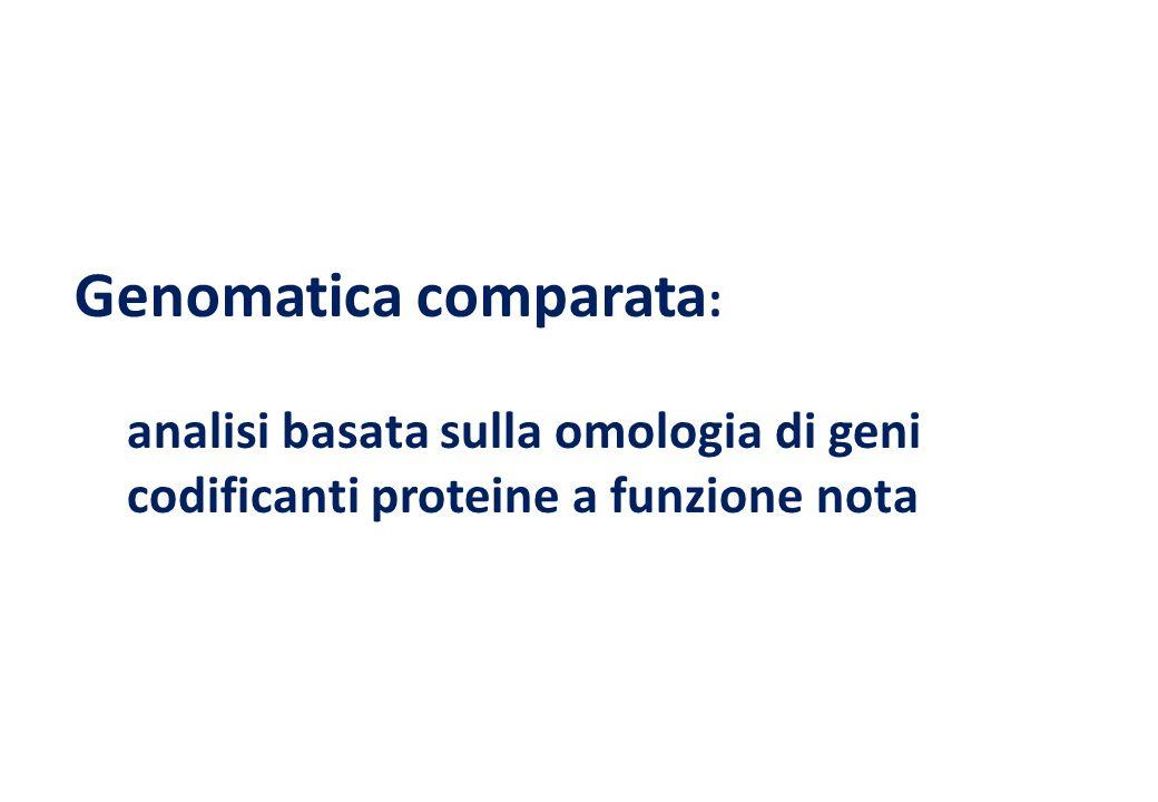 analisi basata sulla omologia di geni codificanti proteine a funzione nota Genomatica comparata :