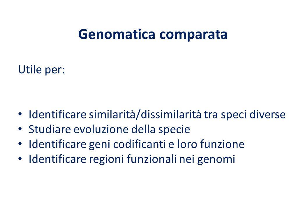Genomatica comparata Utile per: Identificare similarità/dissimilarità tra speci diverse Studiare evoluzione della specie Identificare geni codificanti e loro funzione Identificare regioni funzionali nei genomi