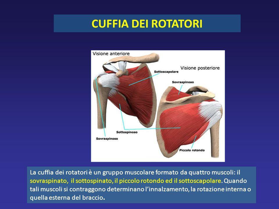 CUFFIA DEI ROTATORI La cuffia dei rotatori è un gruppo muscolare formato da quattro muscoli: il sovraspinato, il sottospinato, il piccolo rotondo ed il sottoscapolare.