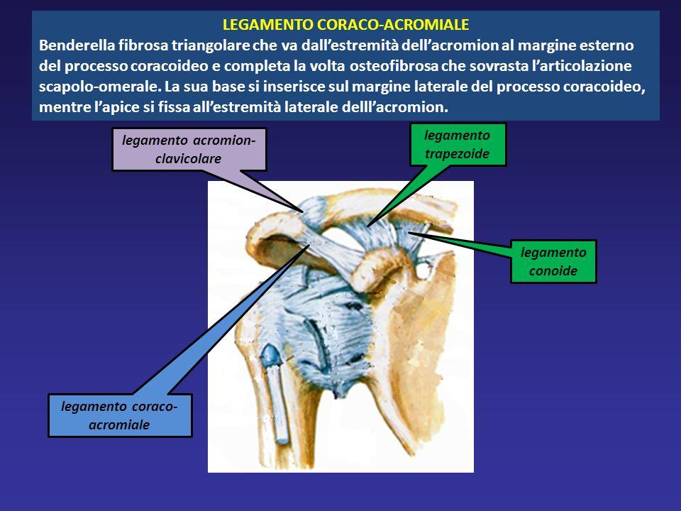 LEGAMENTO CORACO-ACROMIALE Benderella fibrosa triangolare che va dallestremità dellacromion al margine esterno del processo coracoideo e completa la volta osteofibrosa che sovrasta larticolazione scapolo-omerale.