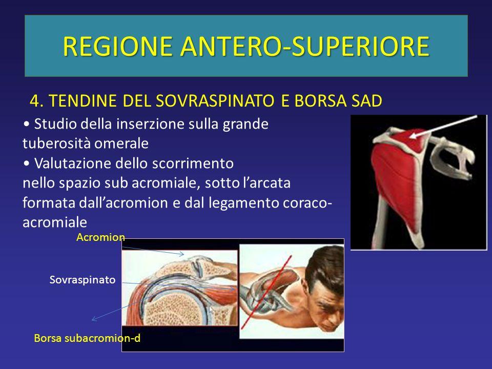 REGIONE ANTERO-SUPERIORE 4.