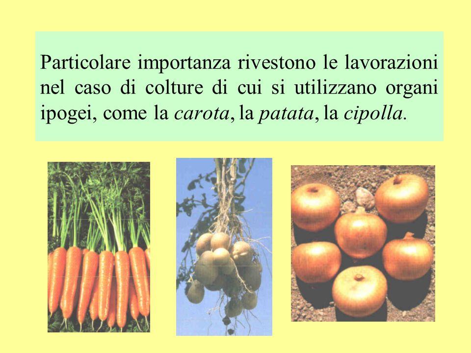 Particolare importanza rivestono le lavorazioni nel caso di colture di cui si utilizzano organi ipogei, come la carota, la patata, la cipolla.