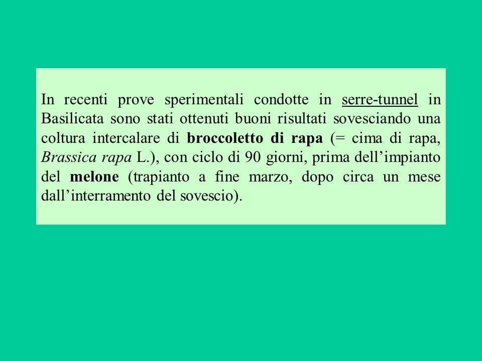 In recenti prove sperimentali condotte in serre-tunnel in Basilicata sono stati ottenuti buoni risultati sovesciando una coltura intercalare di brocco