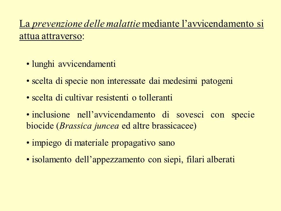 La prevenzione delle malattie mediante lavvicendamento si attua attraverso: lunghi avvicendamenti scelta di specie non interessate dai medesimi patoge