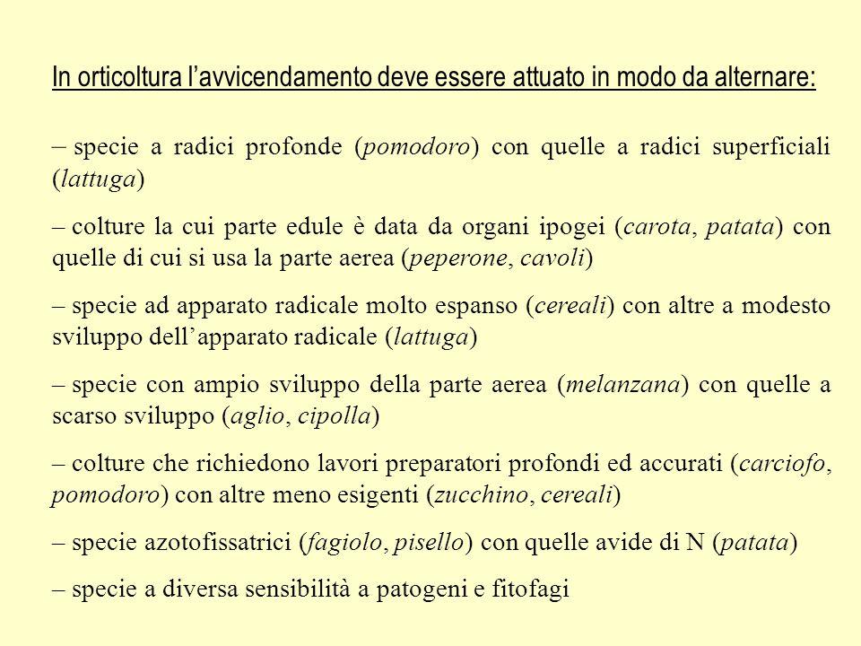 In orticoltura lavvicendamento deve essere attuato in modo da alternare: – specie a radici profonde (pomodoro) con quelle a radici superficiali (lattu
