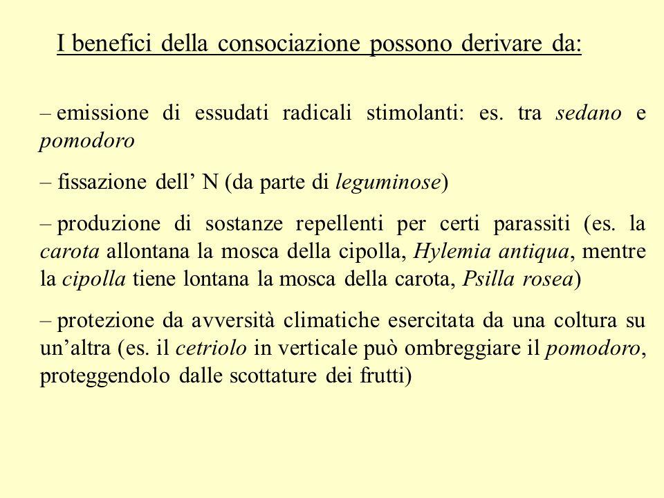 I benefici della consociazione possono derivare da: – emissione di essudati radicali stimolanti: es. tra sedano e pomodoro – fissazione dell N (da par