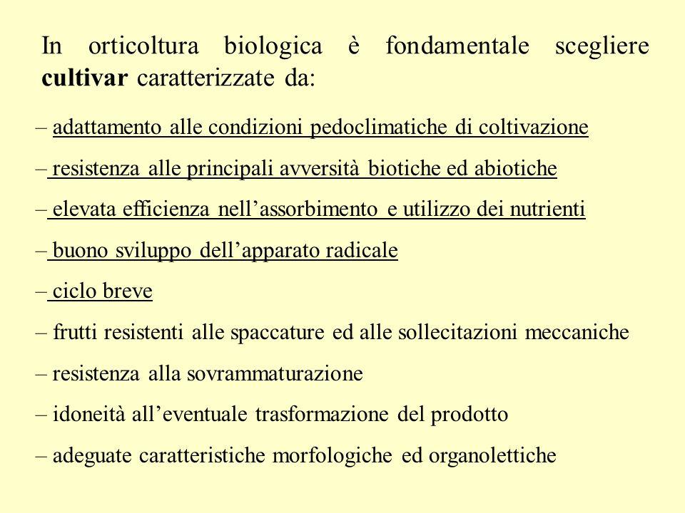 In orticoltura biologica è fondamentale scegliere cultivar caratterizzate da: – adattamento alle condizioni pedoclimatiche di coltivazione – resistenz