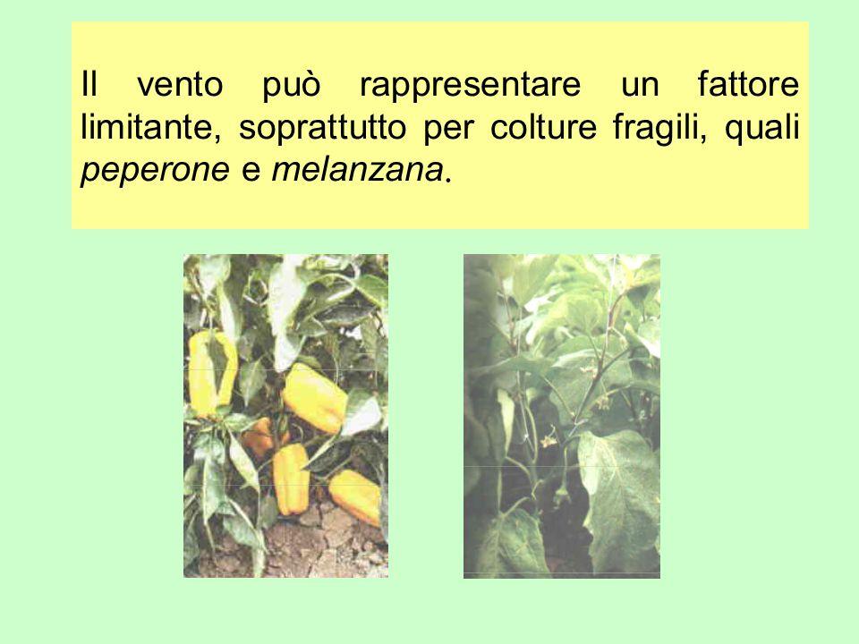 Il vento può rappresentare un fattore limitante, soprattutto per colture fragili, quali peperone e melanzana.