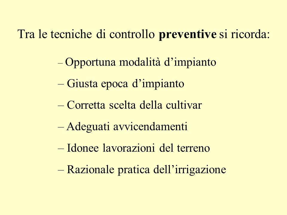 Tra le tecniche di controllo preventive si ricorda: – Opportuna modalità dimpianto – Giusta epoca dimpianto – Corretta scelta della cultivar – Adeguat